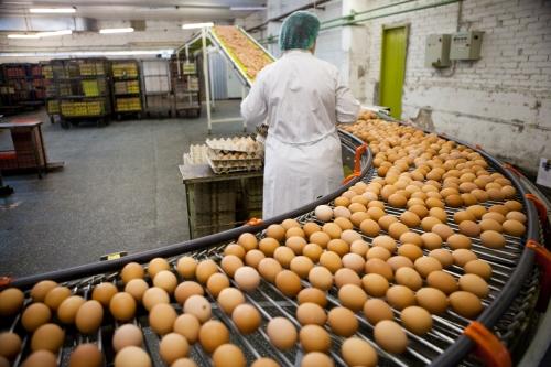 Tuyển 40 nữ đi xuat khau lao dong dai loan làm thực phẩm nhà máy Đỉnh Thắng Đài Bắc