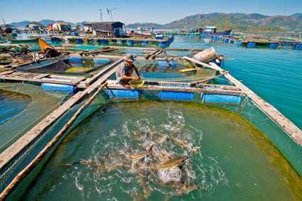 Tuyển 04 nam làm nuôi trồng thủy sản tại nhà máy Lực Giai CAO HÙNG