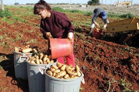 Tuyển lao động xuất khẩu lao động cộng hòa Síp