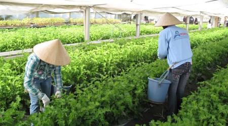 Tuyển 02 nữ làm nông nghiệp tại tỉnh Aichi Nhật Bản