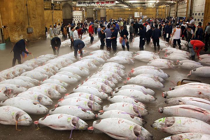 cho-ca-tsukiji